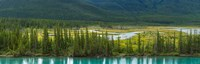 "Trees on a hill, Bow Valley Parkway, Banff National Park, Alberta, Canada by Panoramic Images - 28"" x 9"" - $28.99"
