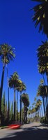 """Palm trees along a road, Beverly Hills, Los Angeles County, California, USA by Panoramic Images - 9"""" x 26"""""""