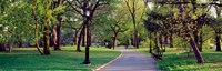 """Trees in a public park, Central Park, Manhattan, New York City, New York State, USA by Panoramic Images - 28"""" x 9"""""""