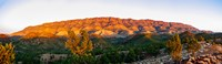 "Trees on a hill, Flinders Ranges, Hawker, South Australia, Australia by Panoramic Images - 31"" x 9"" - $28.99"