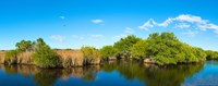 """Reflection of trees in a lake, Big Cypress Swamp National Preserve, Florida, USA by Panoramic Images - 23"""" x 9"""" - $28.99"""