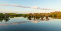 "Anhinga Trail, Everglades National Park, Florida by Panoramic Images - 18"" x 9"", FulcrumGallery.com brand"