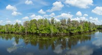 """Reflection of trees in the river, Hillsborough River, Lettuce Lake Park, Hillsborough County, Florida, USA by Panoramic Images - 17"""" x 9"""" - $28.99"""