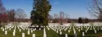 "Headstones in a cemetery, Arlington National Cemetery, Arlington, Virginia, USA by Panoramic Images - 25"" x 9"""