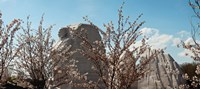 "Cherry trees in front of a memorial, Martin Luther King Jr. National Memorial, Washington DC, USA by Panoramic Images - 20"" x 9"""