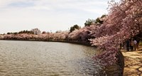 "Tidal Basin, Washington DC by Panoramic Images - 17"" x 9"""