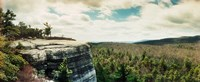 """Forest of trees, Gertrude's Nose, Minnewaska State Park, Catskill Mountains, New York State, USA by Panoramic Images - 22"""" x 9"""""""