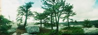 """Close up of trees, Gertrude's Nose, Minnewaska State Park, Catskill Mountains, New York State, USA by Panoramic Images - 25"""" x 9"""""""