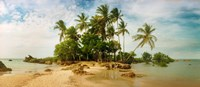 "Palm Trees in Morro De Sao Paulo, Brazil by Panoramic Images - 21"" x 9"""