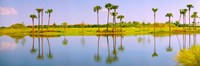 Reflection of trees on water, Lake Worth, Palm Beach County, Florida, USA Fine Art Print