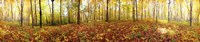 """Trees in a forest, Saint-Bruno, Quebec, Canada by Panoramic Images - 43"""" x 9"""""""