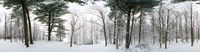 Forest in Winter Quebec Canada
