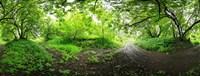 Green Forest Saint-Blaise-sur-Richelieu Quebec Canada