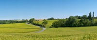 "Dirt road passing through a flax field, Loire-et-Cher, Loire Valley, France by Panoramic Images - 22"" x 9"" - $28.99"