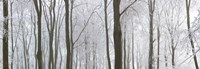 "Snow covered trees in a forest, Wotton, Gloucester, Gloucestershire, England by Panoramic Images - 26"" x 9"""