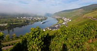 "Vineyards with village at riverfront, Mosel River, Kaimt Mosel Village, Mosel Valley, Rhineland-Palatinate, Germany by Panoramic Images - 17"" x 9"""
