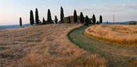 "Road leading towards a farmhouse, Val d'Orcia, Tuscany, Italy by Panoramic Images - 18"" x 9"""