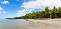 "Trees on the beach, Cape Tribulation, Daintree River National Park, Queensland, Australia by Panoramic Images - 19"" x 9"""