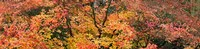 "Multi-Colored Autumn Leaves, Gloucestershire, England by Panoramic Images - 37"" x 9"""