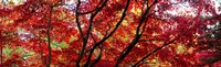 "Autumn Leaves, Gloucestershire, England by Panoramic Images - 29"" x 9"""
