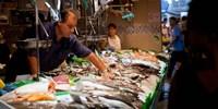"""Fishmonger at a fish stall, La Boqueria Market, Ciutat Vella, Barcelona, Catalonia, Spain by Panoramic Images - 18"""" x 9"""", FulcrumGallery.com brand"""