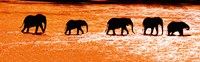 """Herd of African Elephants Crossing the Uaso Nyiro River, Kenya by Panoramic Images - 29"""" x 9"""""""