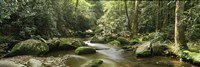 Roaring Fork River, Great Smoky Mountains, Tennessee Fine Art Print