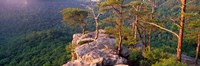 """Trees on a mountain, Buzzards' Roost Fall Creek Falls State Park, Pikeville, Bledsoe County, Tennessee, USA by Panoramic Images - 37"""" x 12"""""""