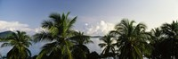 """Palm trees on the beach, St. Thomas, US Virgin Islands by Panoramic Images - 36"""" x 12"""""""