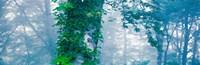 "Forest Nagano Kijimadaira-mura Japan by Panoramic Images - 37"" x 12"""