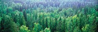 Forest Aulanko National Park Finland by Panoramic Images - various sizes