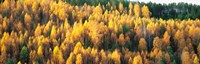 """Fall Colors Sundsval Vicinity Sweden by Panoramic Images - 38"""" x 12"""""""