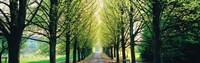 """Tree-lined road Libin vicinity Belgium by Panoramic Images - 38"""" x 12"""""""