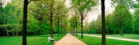 """Tree-lined road Hessen Kassel vicinity Germany by Panoramic Images - 37"""" x 12"""""""
