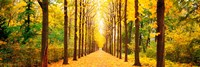 """Tree-lined road Schwetzingen Germany by Panoramic Images - 36"""" x 12"""""""