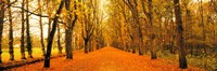 """Tree-lined road Loire Chenonceaux France by Panoramic Images - 36"""" x 12"""""""