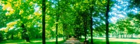 """Tree-lined road Dresden vicinity Germany by Panoramic Images - 38"""" x 12"""""""