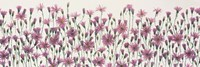 China Asters by Panoramic Images - various sizes - $32.49