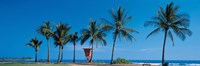 """Palm trees Oahu HI USA by Panoramic Images - 36"""" x 12"""" - $34.99"""