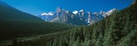 Forest with Mountains in the Background, Banff National Park Canada by Panoramic Images - various sizes - $32.49