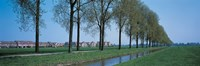 "Aalsmeer Holland Netherlands by Panoramic Images - 36"" x 12"""