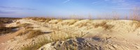 """Sand dunes on the beach, Anastasia State Recreation Area, St. Augustine, St. Johns County, Florida, USA by Panoramic Images - 34"""" x 12"""""""