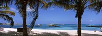 """Palm trees on the beach, Anguilla by Panoramic Images - 34"""" x 12"""" - $34.99"""