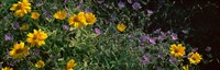 """Flowers in a botanical garden, Buffalo And Erie County Botanical Gardens, Buffalo, Erie County, New York State by Panoramic Images - 38"""" x 12"""""""