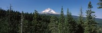 "Trees in a forest with mountain in the background, Mt Hood National Forest, Hood River County, Oregon, USA by Panoramic Images - 37"" x 12"" - $34.99"