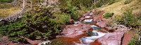 "Low angle view of a creek, Baring Creek, US Glacier National Park, Montana, USA by Panoramic Images - 37"" x 12"""