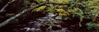 """Stream flowing through a forest, Adirondack Mountains, New York State, USA by Panoramic Images - 36"""" x 12"""""""