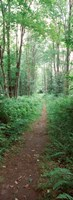 """Trail passing through a forest, Adirondack Mountains, Old Forge, Herkimer County, New York State, USA by Panoramic Images - 12"""" x 33"""""""