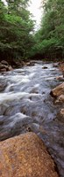 """River flowing through a forest, Moose River, Adirondack Mountains, New York State (vertical) by Panoramic Images - 12"""" x 33"""""""