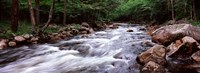 """River flowing through a forest, Moose River, Adirondack Mountains, New York State (horizontal) by Panoramic Images - 33"""" x 12"""""""